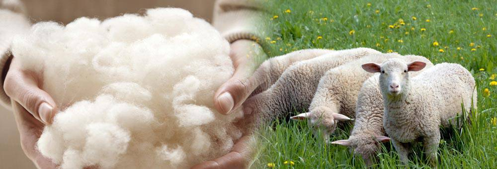 全毛精紡羊毛